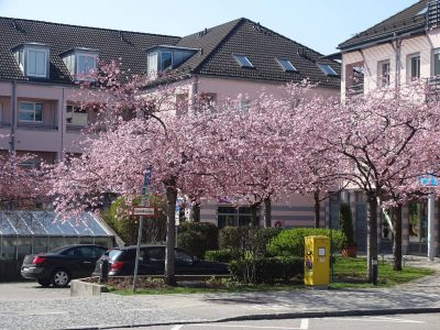 Neubiberg: Fünf Forderungen für eine wirksame Baumschutzverordnung #TagdesBaumes